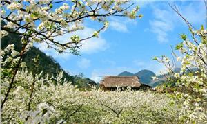 5 lý do du lịch Tây Bắc Mùa Xuân!