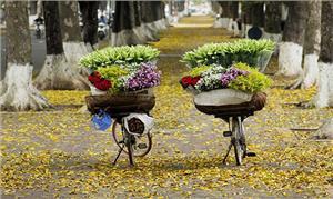 Hà Nội mười hai tháng mười hai mùa hoa nở