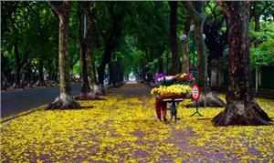 Hà Nội quyến rũ trong hương sắc mùa thu