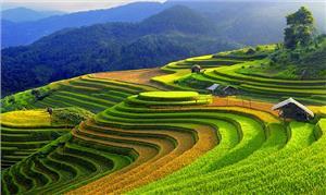 Ruộng bậc thang Việt Nam vào top ảnh du lịch đẹp